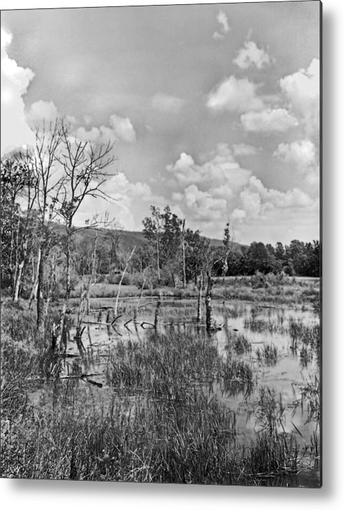 Ansel Adams Metal Print featuring the photograph Swamp by Curtis J Neeley Jr