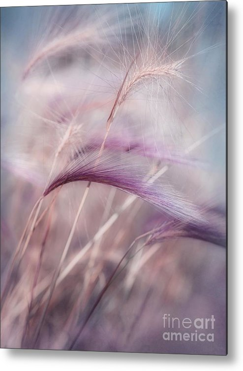 Barley Metal Print featuring the photograph Whispers In The Wind by Priska Wettstein