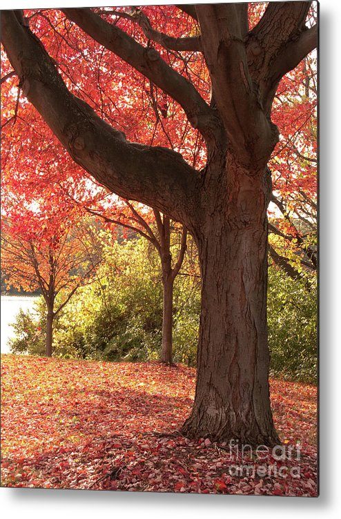 Autumn Metal Print featuring the photograph Shading Autumn by Ann Horn