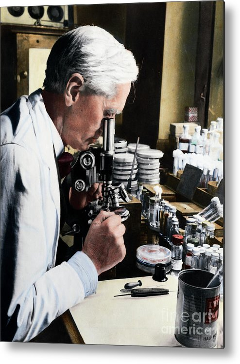 Microscope Metal Print featuring the photograph Alexander Fleming At Microscope by Bettmann