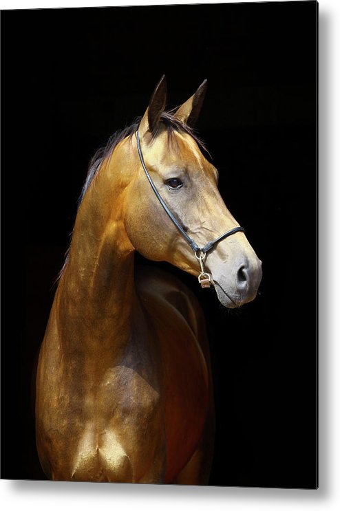Horse Metal Print featuring the photograph Golden Horse by Photographs By Maria Itina