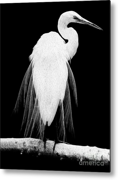 Digital Painting Metal Print featuring the digital art Great Egret in Full Bloom I - L by Kenneth Montgomery