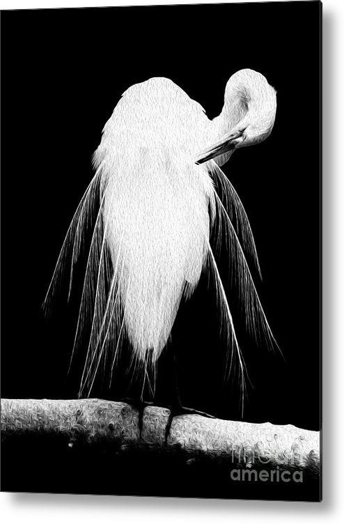 Digital Metal Print featuring the digital art Great Egret In Full Bloom 3 by Kenneth Montgomery