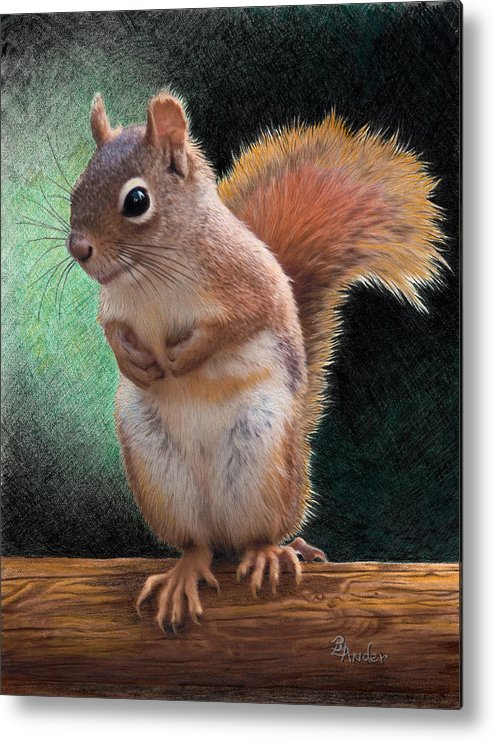 Squirrel Metal Print featuring the drawing Please by Brent Ander