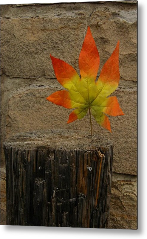 Color Photography Metal Print featuring the photograph Faux Leaf by Kirk Griffith