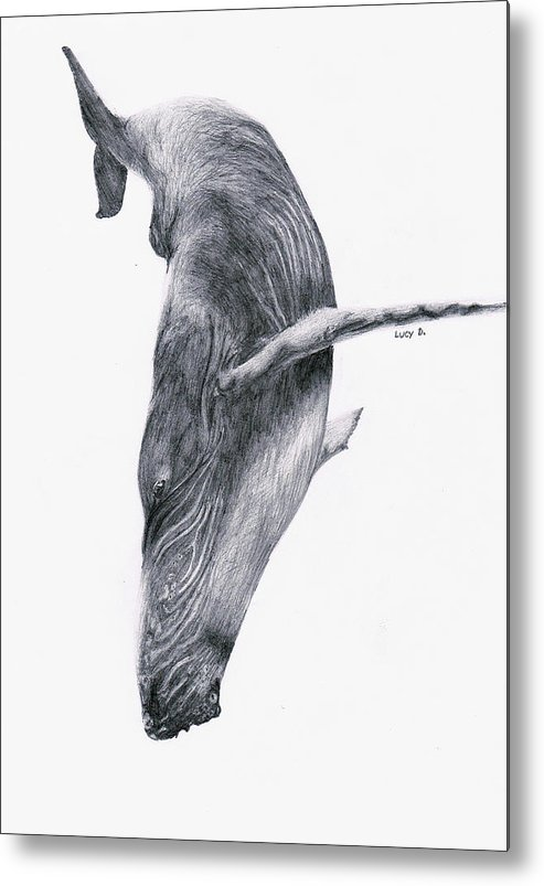 Whale Metal Print featuring the drawing Whale by Lucy D