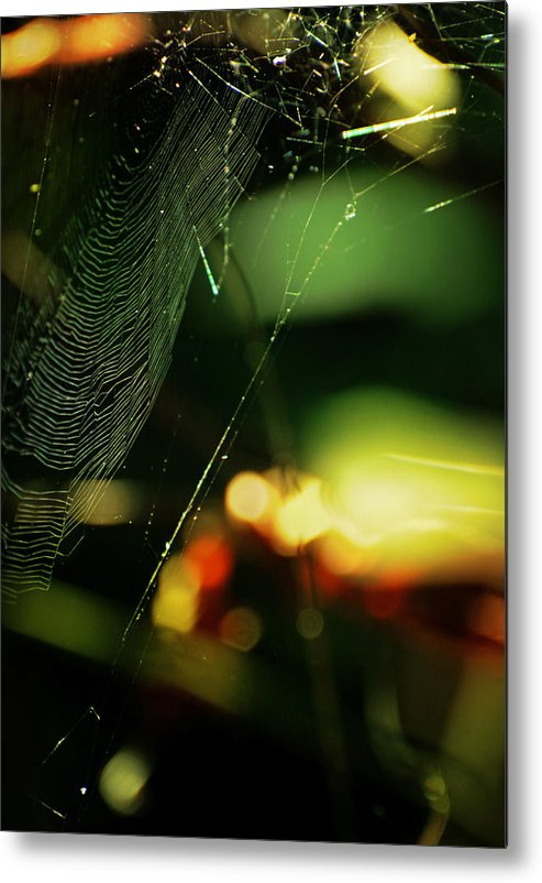 Spiderweb Metal Print featuring the photograph Crown'd by Rebecca Sherman