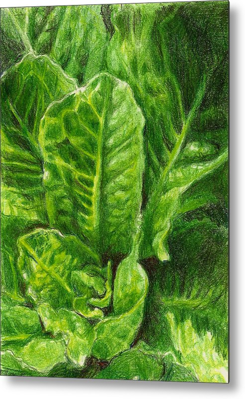 Lettuce Metal Print featuring the photograph Romaine Unfurling by Steve Asbell