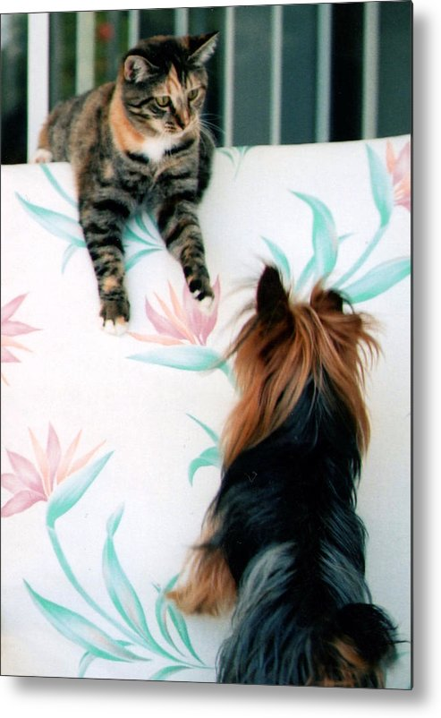 Cat Metal Print featuring the photograph We Can Talk This Over... by Tanya Tanski