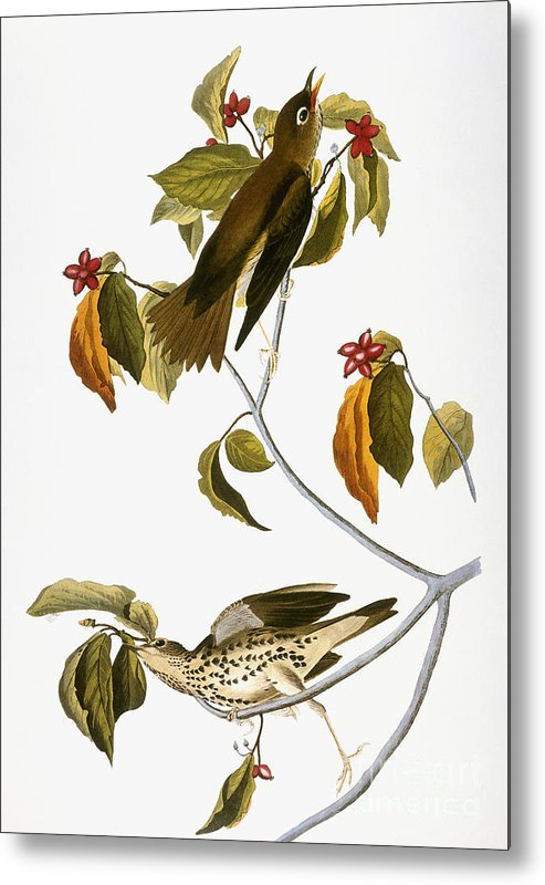 1838 Metal Print featuring the photograph Audubon: Thrush by Granger