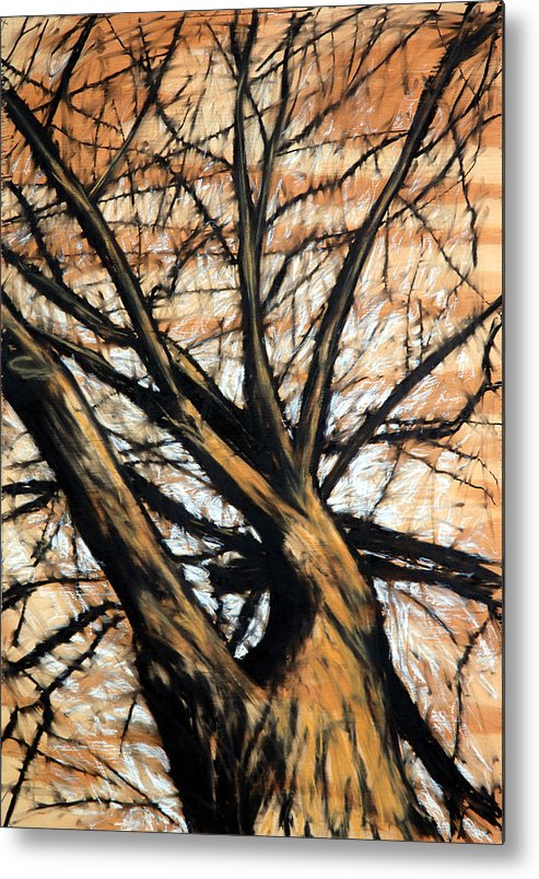 Tree Metal Print featuring the drawing Dead Elm by John Terwilliger