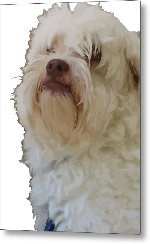 Thought Metal Print featuring the photograph Grumpy Terrier Dog Face by Taiche Acrylic Art