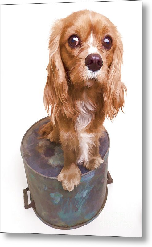 Dog Metal Print featuring the photograph King Charles Spaniel Puppy by Edward Fielding