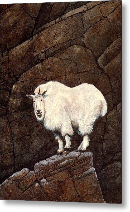 Wildlife Metal Print featuring the painting Mountain Goat by Frank Wilson