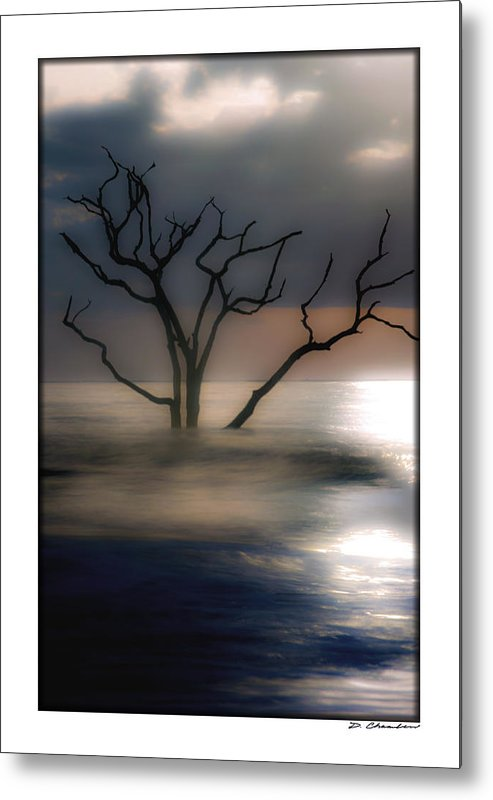 Sunrise Metal Print featuring the photograph Mystery Tree by Doug Chambers