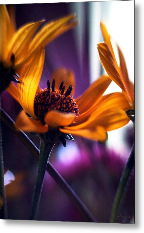 Flowers Metal Print featuring the photograph Thoughts Are Things... by Arthur Miller