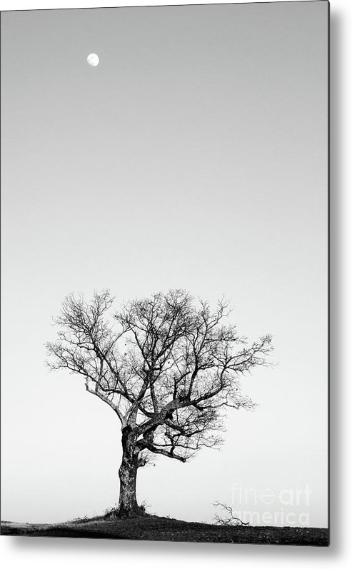 Landscape Photography Metal Print featuring the photograph Tree And Moon by David Waldrop