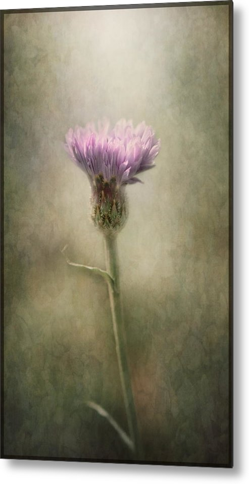Weed Metal Print featuring the photograph A Weed Is But A Flower In The Wrong Place.. by Pauline Fowler