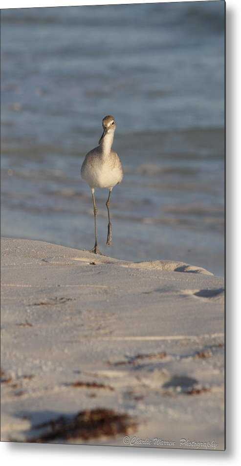 Beach Metal Print featuring the pyrography Walking Tall by Charles Warren