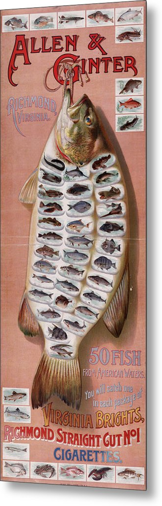 Fish Metal Print featuring the digital art 50 Fish From American Waters by Georgia Fowler