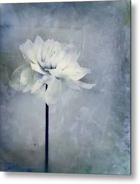 Flower Metal Print featuring the photograph Simple. by Lyn Darlington