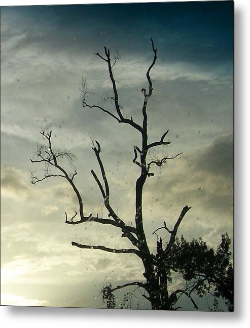 Nature Metal Print featuring the photograph Old Tree by Katie OKeefe