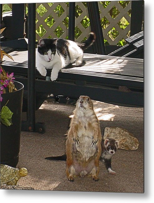 Ferret Metal Print featuring the photograph Unusual Friends by Elisia Cosentino