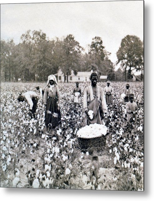 Georgia Metal Print featuring the photograph Georgia Cotton Field - C 1898 by International Images