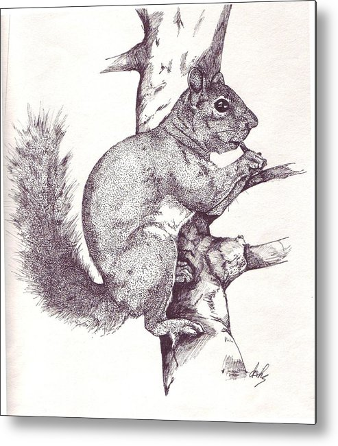 Squirrel Metal Print featuring the drawing Grey Squirrel by Debra Sandstrom