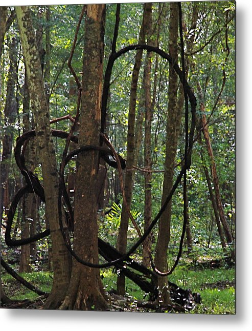 Nature Metal Print featuring the photograph Hearts In The Woods by Shannon Caraccia