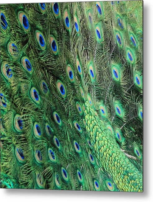 Peacock Feather Pattern Metal Print featuring the photograph Peacock Feather Pattern by Rose Webber Hawke