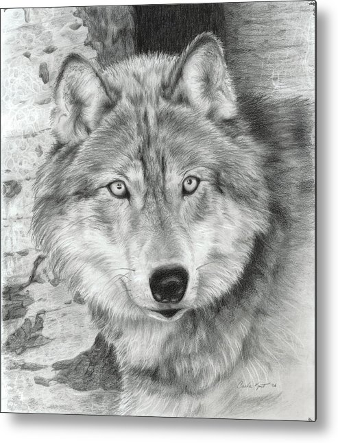 Pencil Metal Print featuring the drawing Watchful Eyes by Carla Kurt