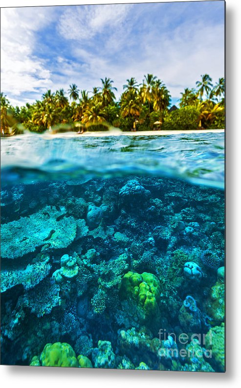 Asia Metal Print featuring the photograph Beautiful Marine Life by Anna Om