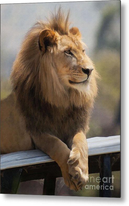 Animal Metal Print featuring the digital art Majestic Lion by Sharon Foster