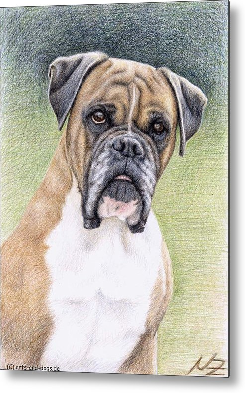 Dog Metal Print featuring the drawing Boxer Portrait by Nicole Zeug