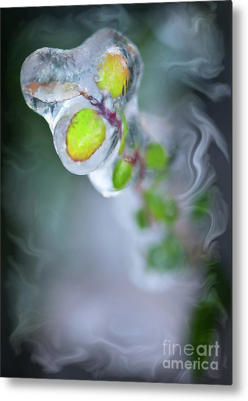 Defrost Metal Print featuring the photograph D E F R O S T by Charles Dobbs