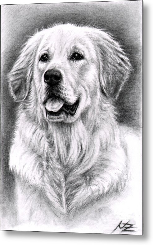 Dog Metal Print featuring the drawing Golden Retriever Spence by Nicole Zeug