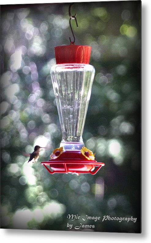 Hummingbird Metal Print featuring the photograph Got To Go Fast by James Barrere