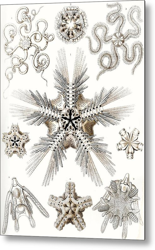 Vertical Metal Print featuring the painting Kunstformen Der Natur by Ernst Haeckel