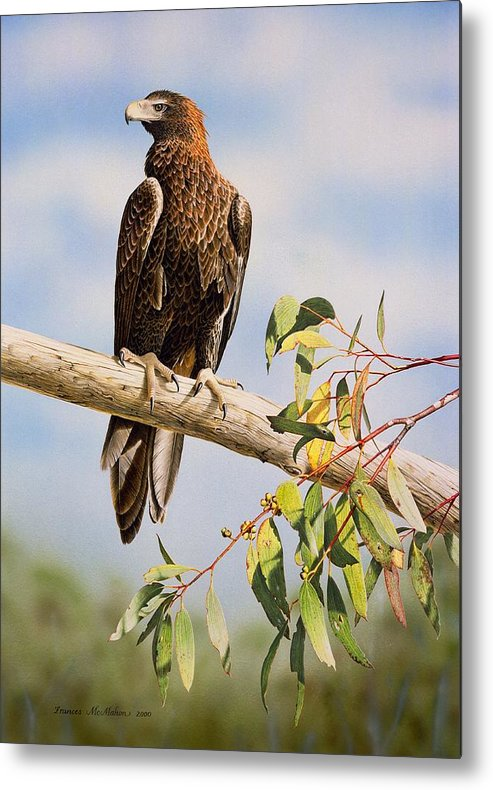 Gum Trees Metal Print featuring the painting Lofty Visions - Wedge-tailed Eagle by Frances McMahon