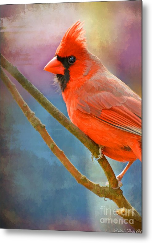 Cardinal Metal Print featuring the photograph Male Cardinal - Colorful Perch - Digital Paint by Debbie Portwood