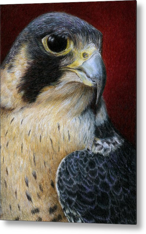 Peregrine Falcon Metal Print featuring the painting Peregrine Falcon by Pat Erickson