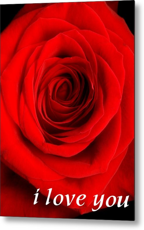 Rose Metal Print featuring the photograph Rose 6 I Love You by Matthew Howard