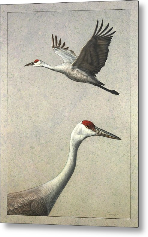 Crane Metal Print featuring the painting Sandhill Cranes by James W Johnson