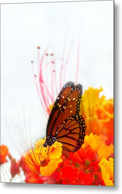Soft Metal Print featuring the photograph Soft Embrace by Kume Bryant