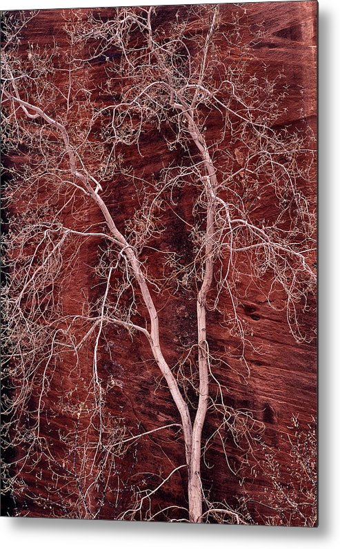 Zion National Park Metal Print featuring the photograph Southwest Texture by Leland D Howard