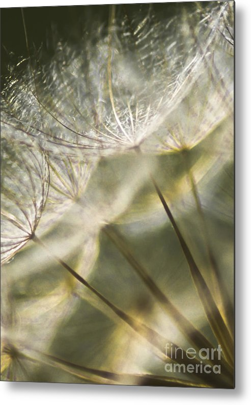 Dandelion Metal Print featuring the photograph Take Me With You When You Go by Jan Bickerton