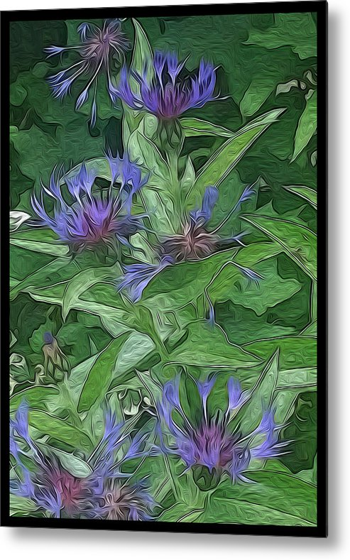 Flower Outdoor Painting Metal Print featuring the digital art Thistle by Steve plews