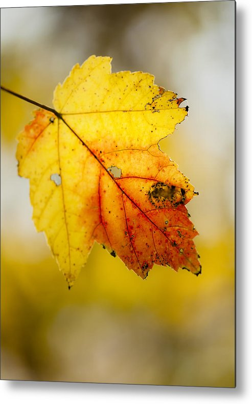 Leaf Metal Print featuring the photograph Touched By The Sun by Viola Jasko
