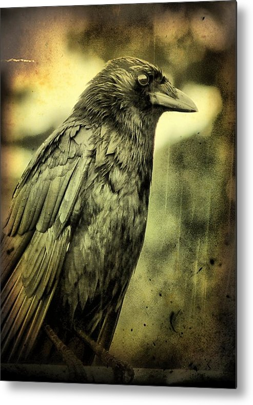 Vintage Crow Metal Print featuring the photograph Vintage Crow by Gothicrow Images